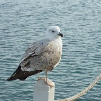 A seagull which looks itself over the shoulder…