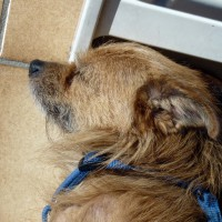 Photo small dozing Dog